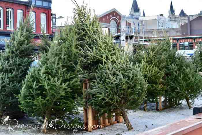 Fresh cut Christmas Trees for sale Ottawa, Byward Market, Canada
