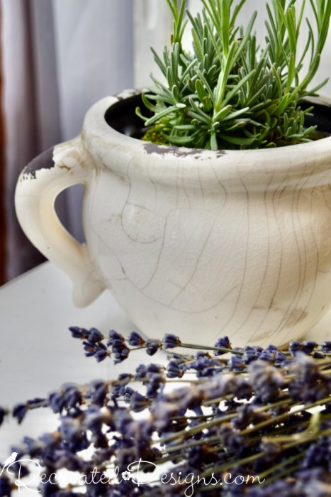 White crackly pot with Lavender