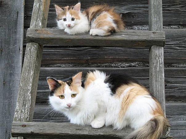 gato en la escalera