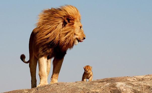 leon padre e hijo