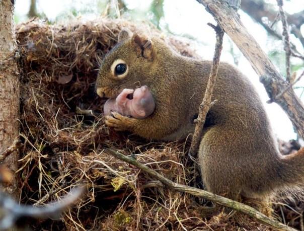 Ardilla con su bebé