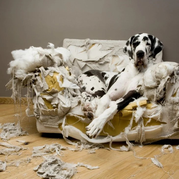 sillon roto perro blanco con negro