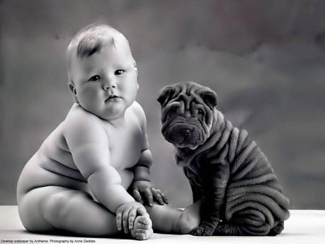 perro y bebe arrugados