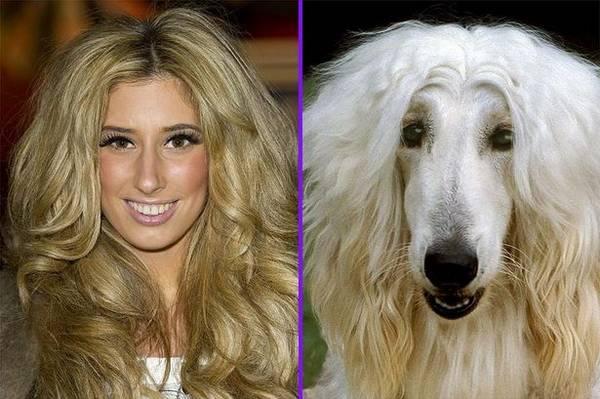 perro greñudo blanco