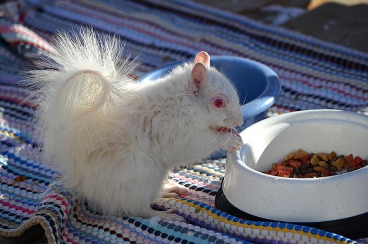 ardilla albina con ojos rojos