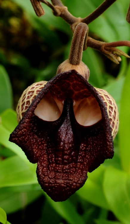 Flor con figura diferente y rara
