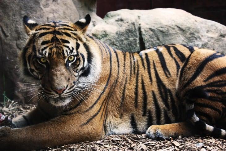 Los 20 Animales Que MATAN Ms HUMANOS Al Ao