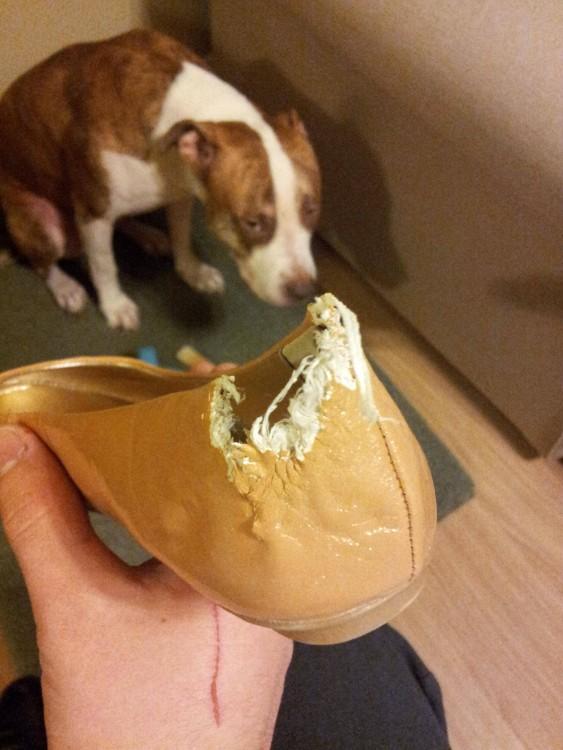 Perro bajo una mano con un zapato mordido por el perro