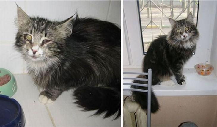impresionantes antes y después de un gatito rescatado