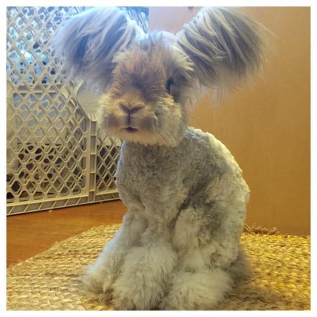Wally El Conejo De Largas Orejas Y Look Super Cool
