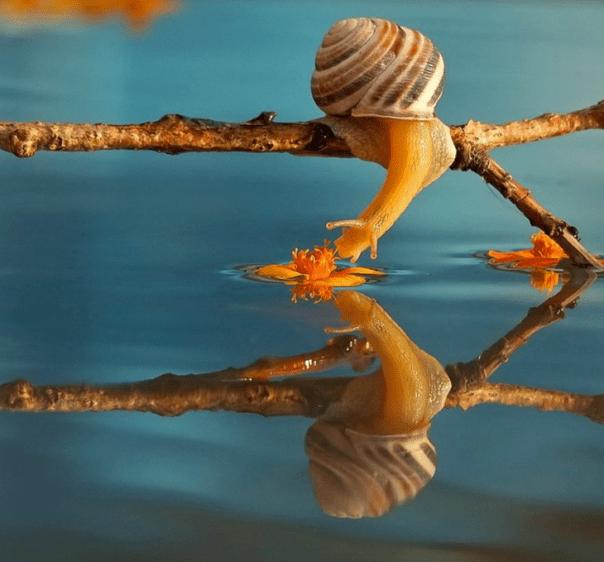 caracol tomando agua desde una ramita