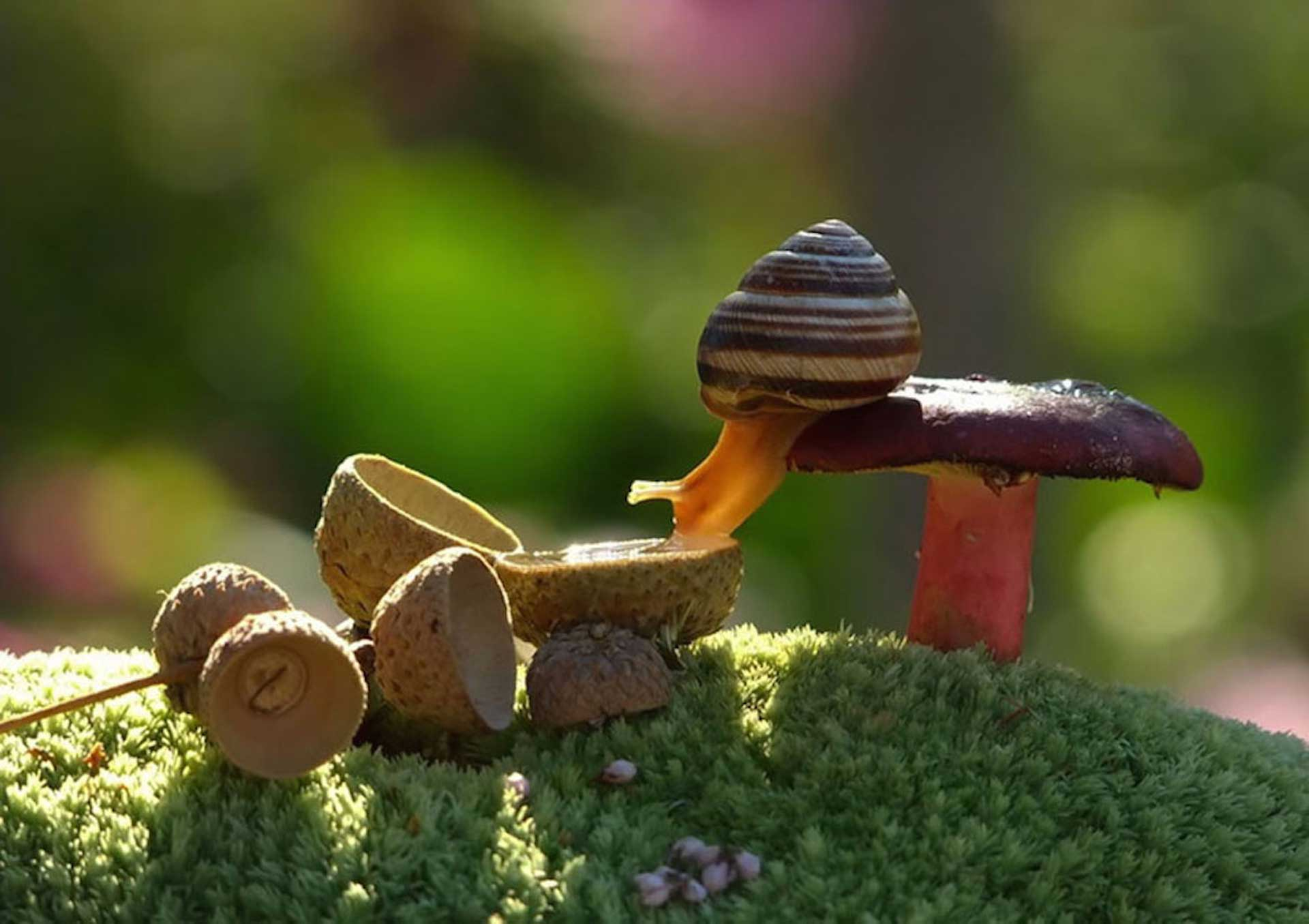 Resultado de imagen de caracol
