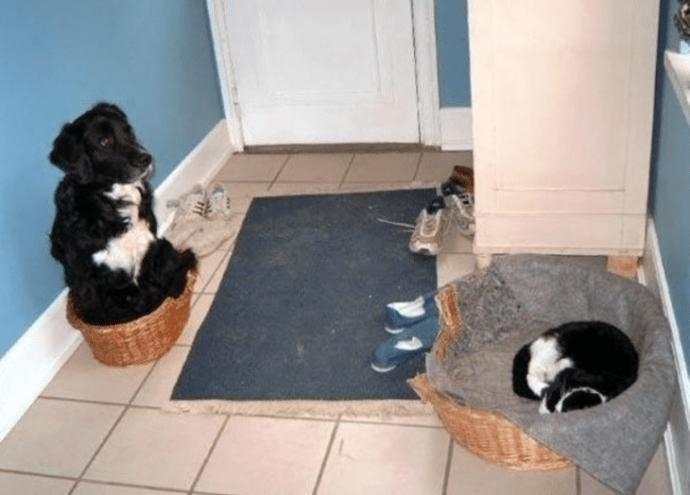 CÃO deitado na cama CAT CAT POR QUE NÃO DEIXE DE DORMIR