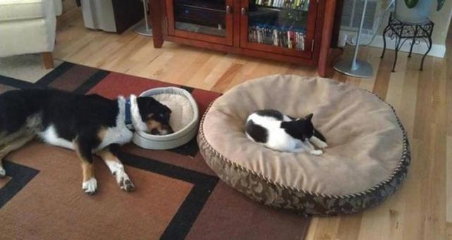 Acomodando cara de cachorro na cama por CAT CAT LE QUITO SEU