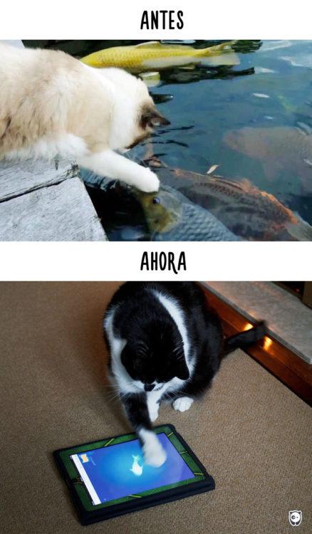 gatos pescando antes y ahora jugando en un ipad