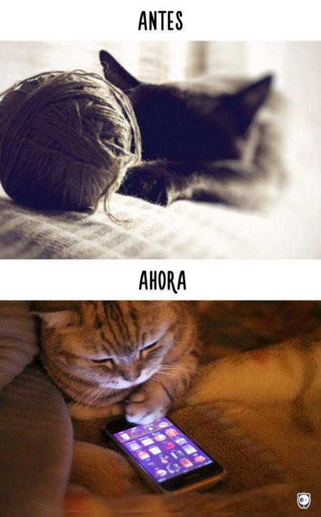 gato con estambre antes y ahora con el celular