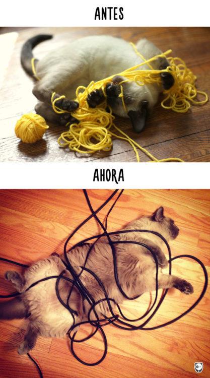 gato enredándose en estambre antes y ahora en los cables