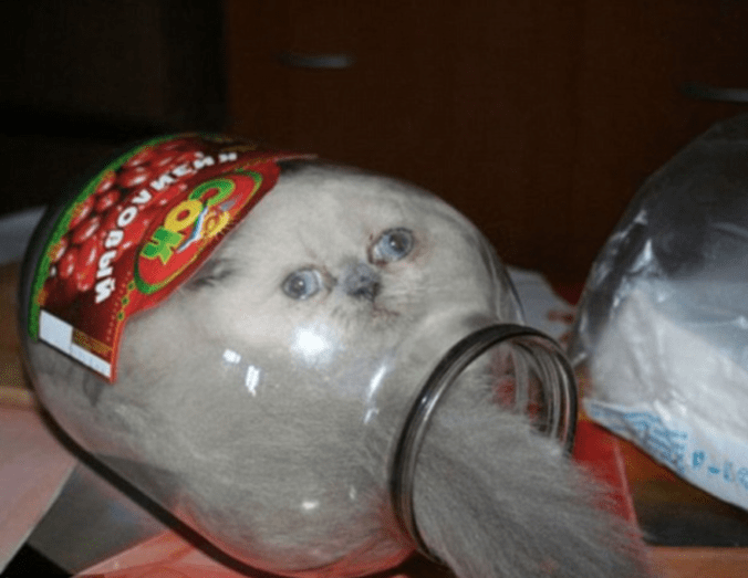 gato atrapado en una botella