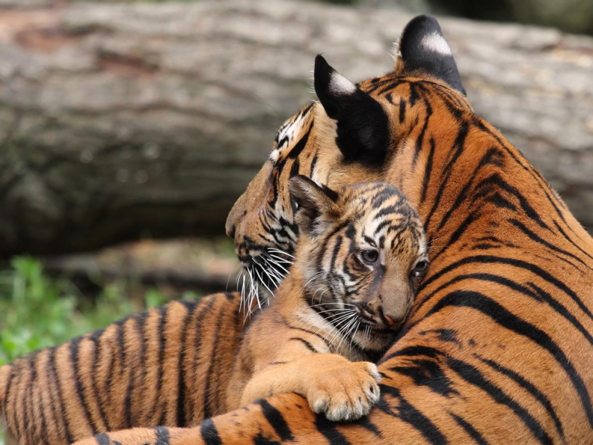 15 Fotos De Mamas Animales Cuidando Y Amando A Sus Cachorros