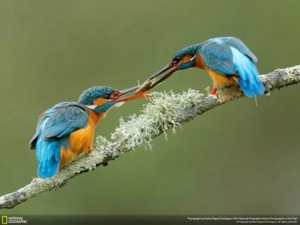 pájaro dando un insecto a otro pájaro