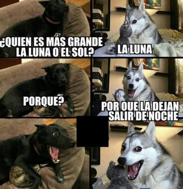 Memes fáciles luna husky meme