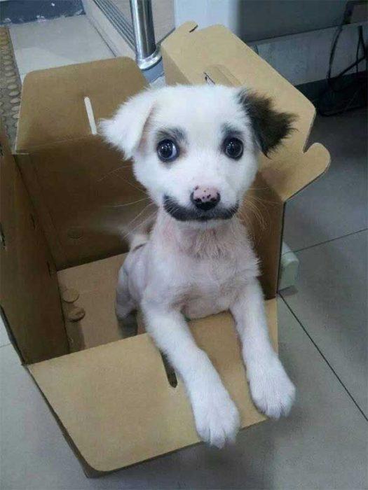 perro con hacia manchada de negro marca piel