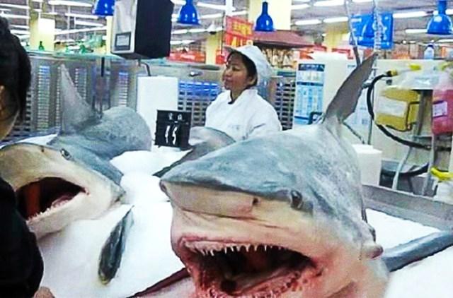 tiburón china walt mart