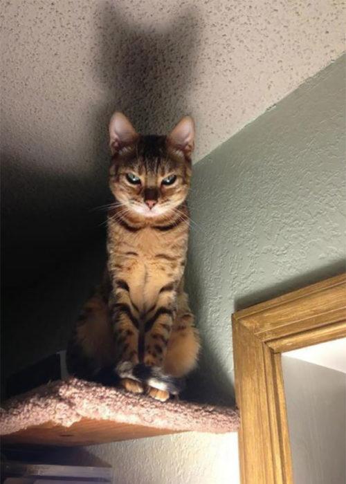 gato enojado parado en la puerta