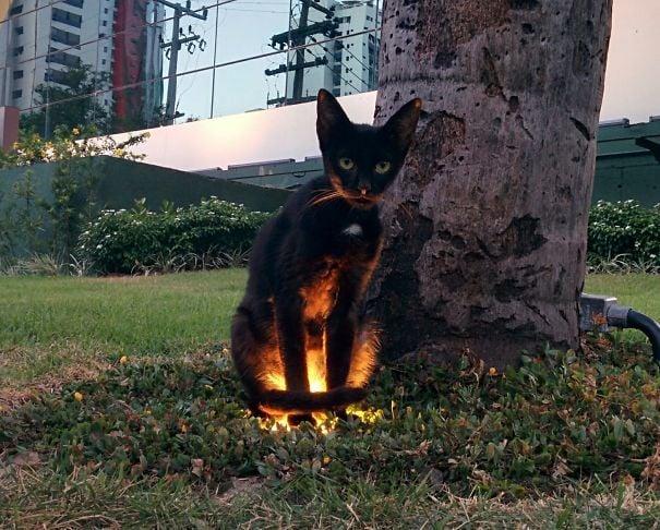 gato desalmado en el pasto