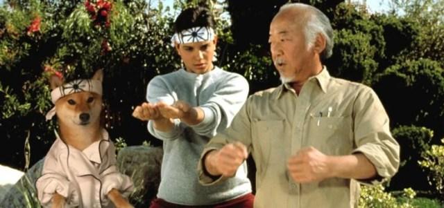 karate kid shiba inu perrito