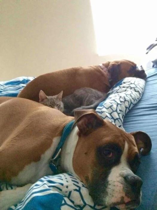animales acostados en una cama