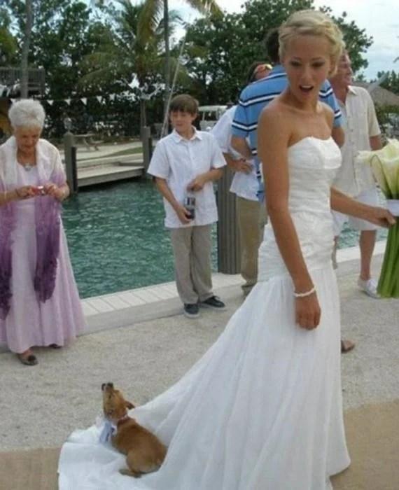 perro acostado en vestido de novia