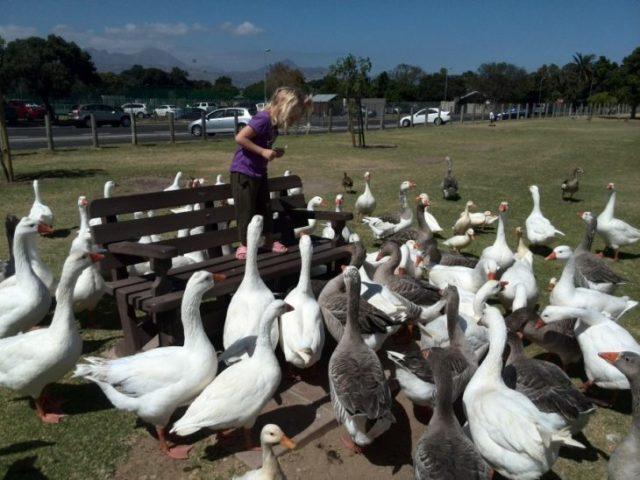 patos niña alimentándolos