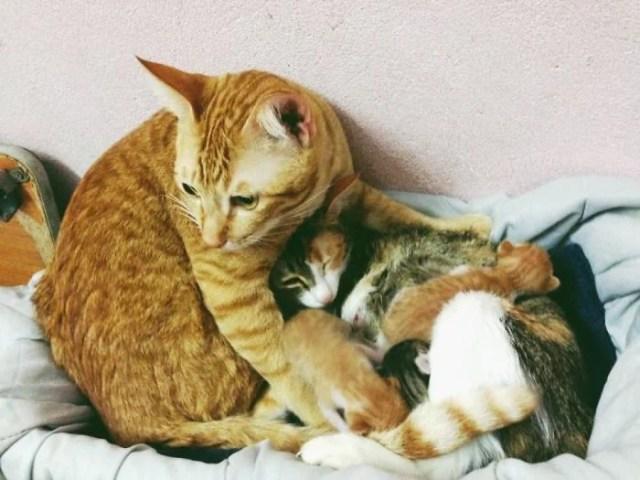 gatos familia amarillo