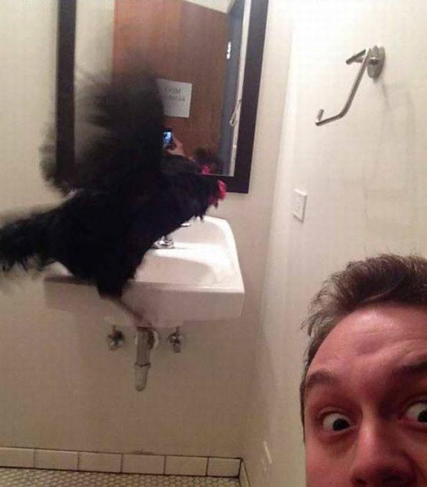 gallo negro en un baño
