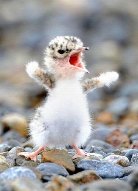 ave pájaro enojado