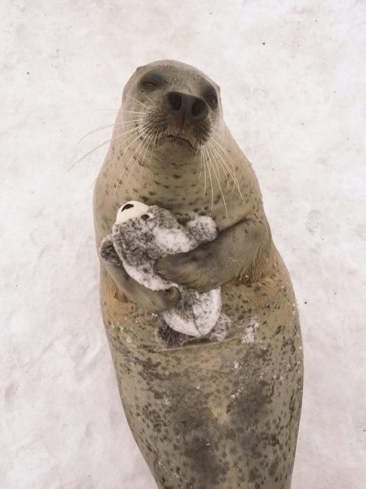 Foca abraza a su foca de peluche