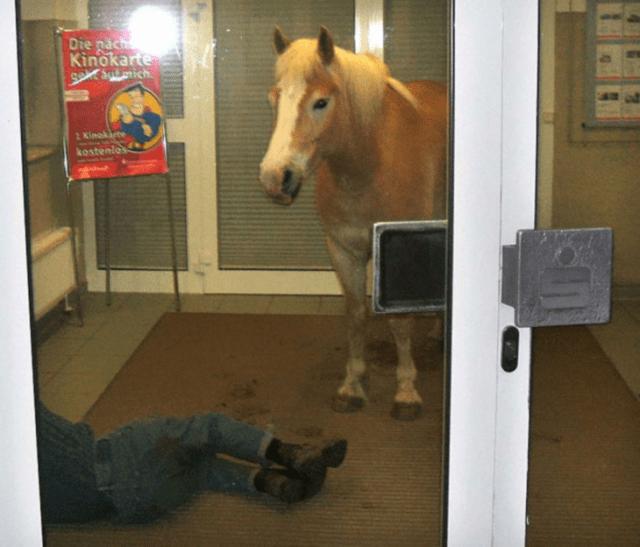 caballo dentro de cuarto