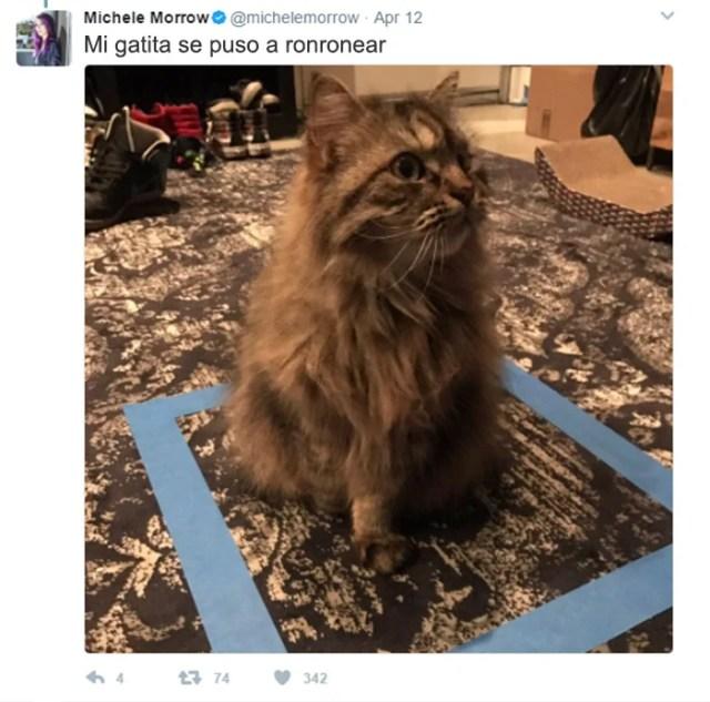 cosas gatitos 3