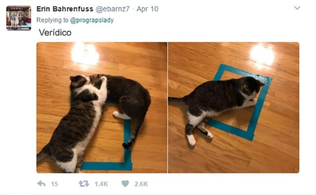 cosas gatitos 4