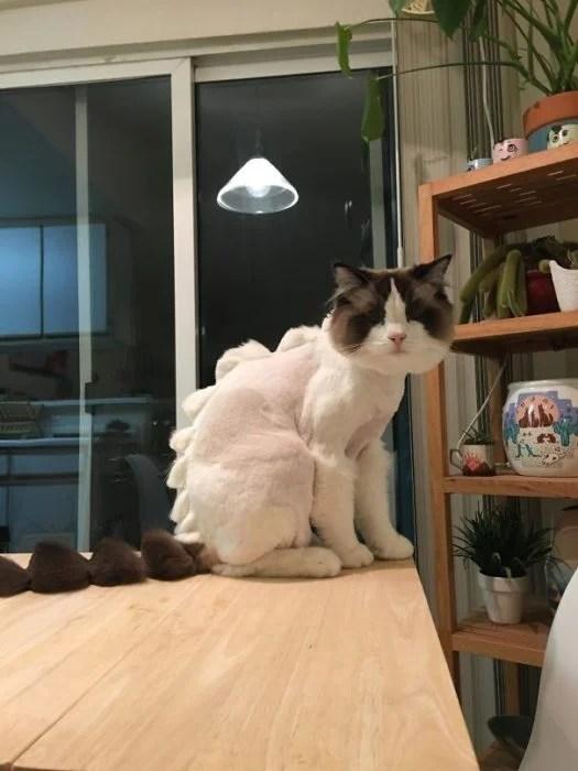 gato sesgo de cabello
