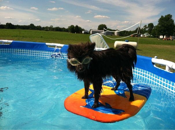 perro tabla de surf alberca googles