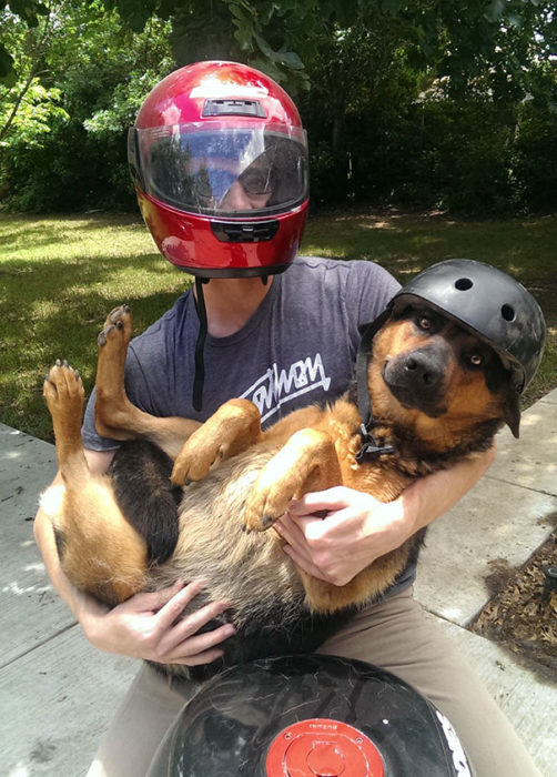 perro moto paseo