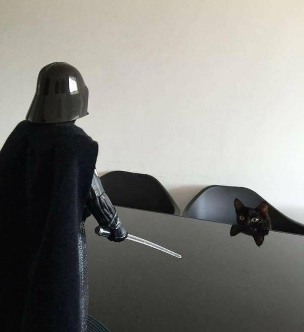 star wars gatito negro