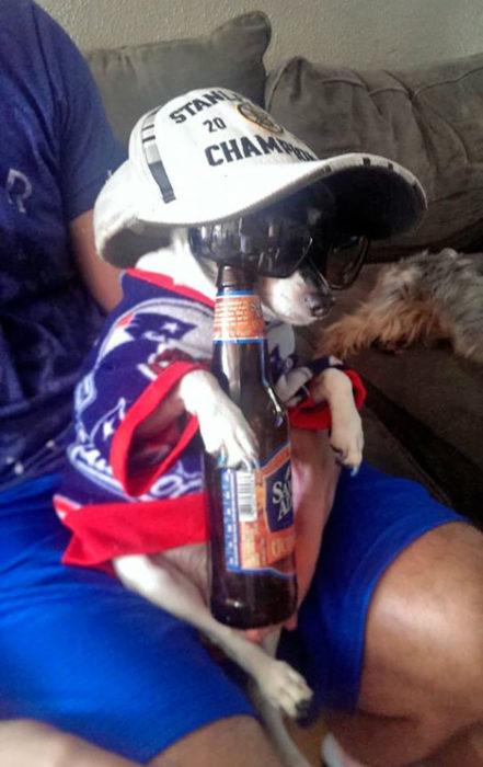 perro tomando cerveza disfraz