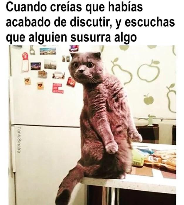 meme de gatito sobre discutir