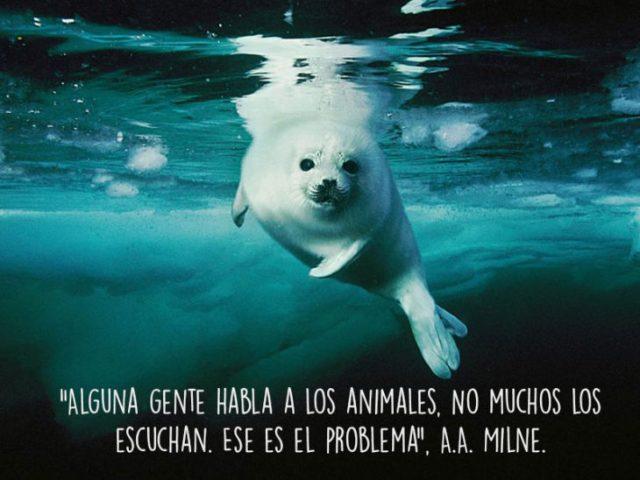 foca animales foto oración Natgeo