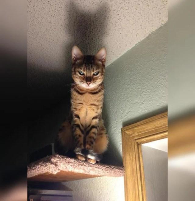 gatos satanicos 4