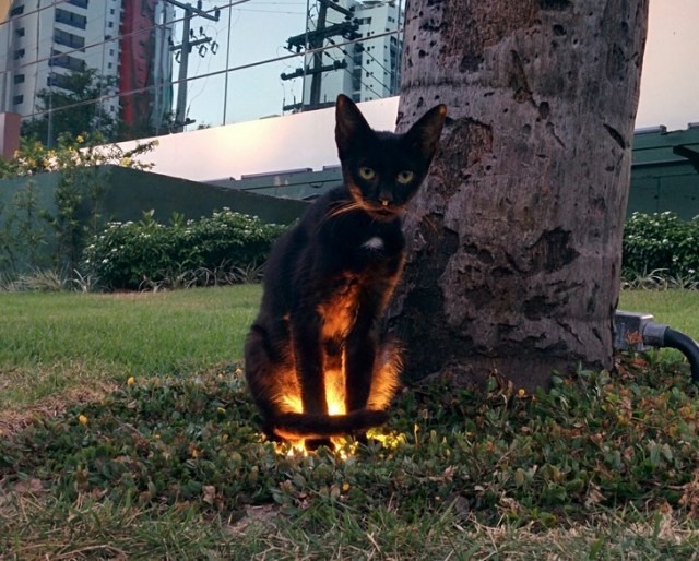 gatos satanicos 7