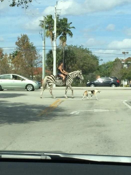 mujer montando una cebra en la ciudad